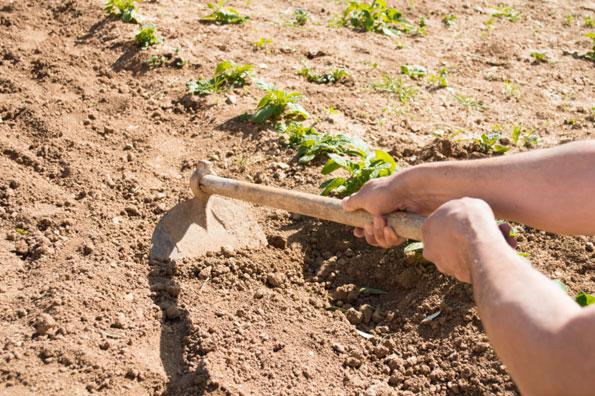 Agricoltura Giovanile