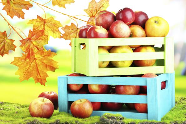 mele agricoltura