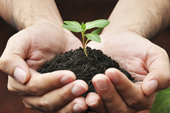 come fertilizzare le piante in modo naturale itaeuropaunita istituto tecnico agrario paritario. Black Bedroom Furniture Sets. Home Design Ideas