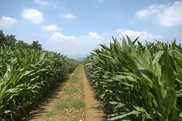 Agricoltura Temperature