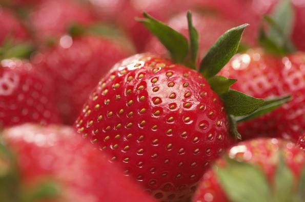 Le migliori piante da frutto da coltivare in vaso for Piante da frutto vaso