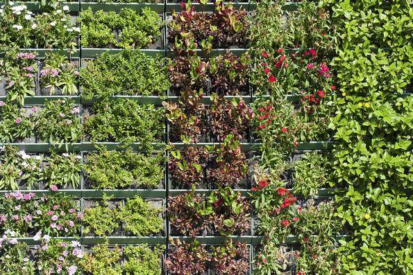 I vantaggi della coltivazione verticale itaeuropaunita for Plantas usadas para jardines verticales