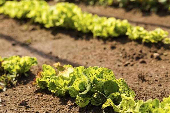 semplificazione agricola