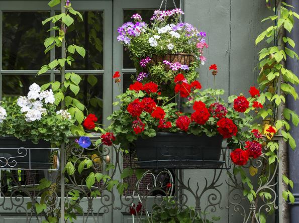 Piante Per Balcone : Le piante da balcone colorate e profumate itaeuropaunita