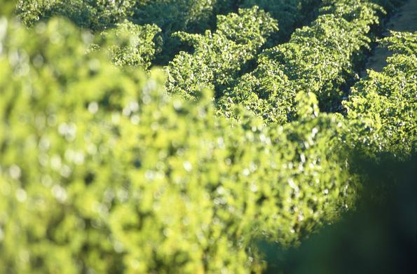 agricoltura green