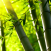 canne bambu