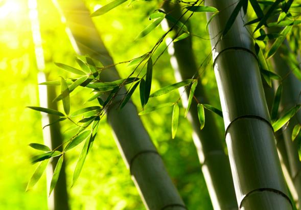 Bamb in crescita sostenibile ed economico for Canne di bamboo da arredo