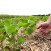 perito agrario competenze